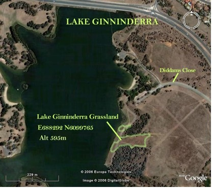 Lake Ginninderra Remnants