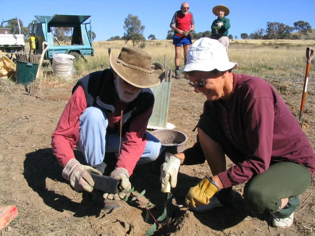 FOAB members planting Snow Gums. Photo: H. Jaireth